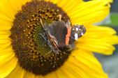 Hof am Teich - Insektenvielfalt.JPG