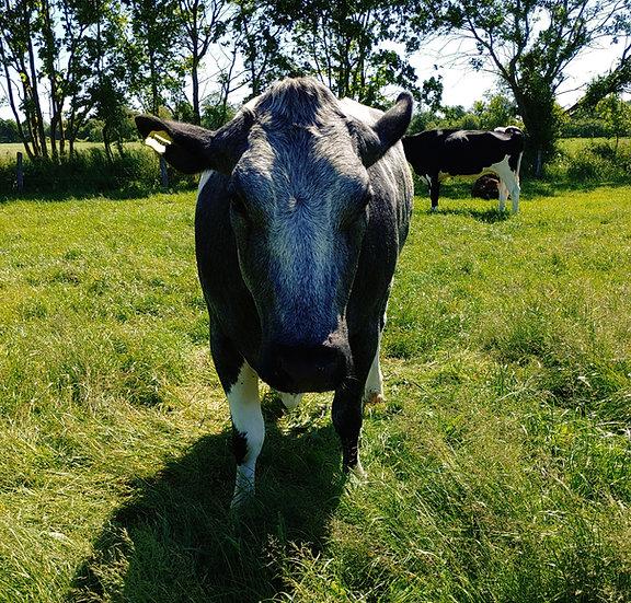 Kostbarkeiten vom weiß-blau belgischen Rind