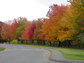 Lakewood Village Apartments Fall Foliage