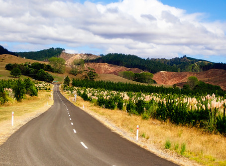New Zealand roadtrippin p5. From freedom to lockdown