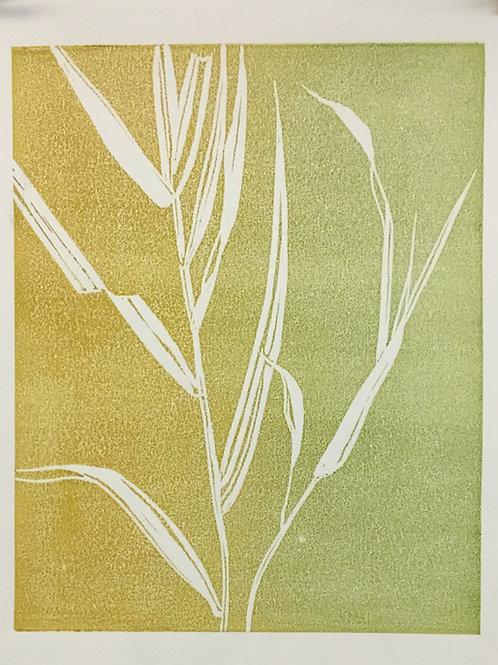 Sedge Grass 1
