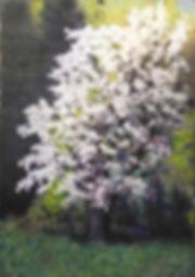 she still blooms.jpg