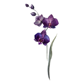 fleurs 3D wix