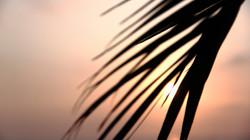 CU+palm+tree+in+sun