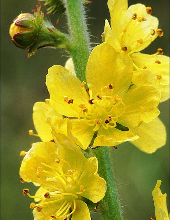 consultas de astrología y flores de bach