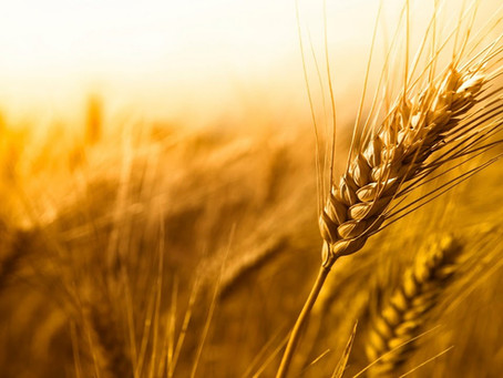 Virgo. Separar la paja del trigo.