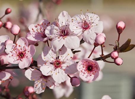 Cielo y Tierra: Astrología y Flores de Bach