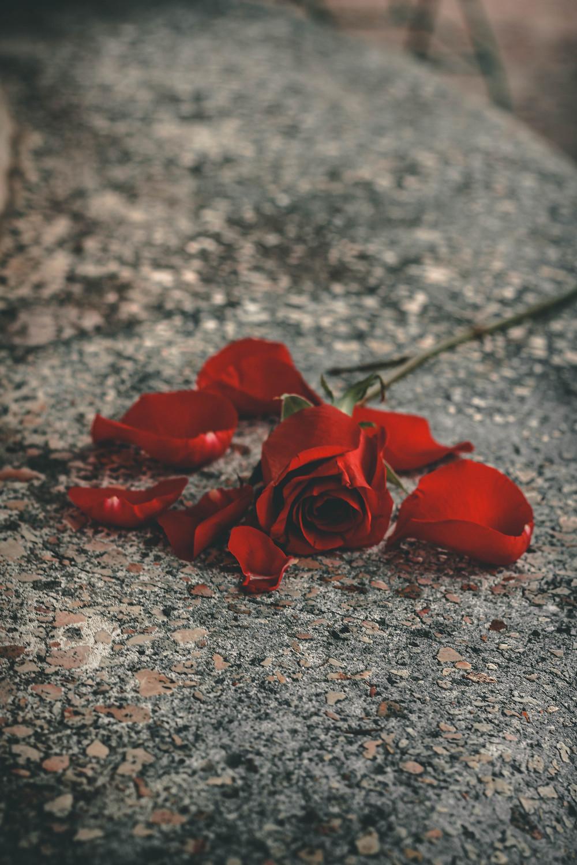 duelo, rituales, ceremonias, psicología, cómo afrontar el duelo, la necesidad del ritual