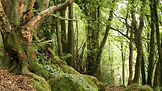 woodland_trust_w660_1764936_10116881800x1011.jpg