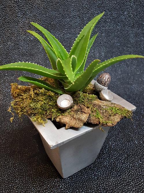 Aloe im Silbertopf
