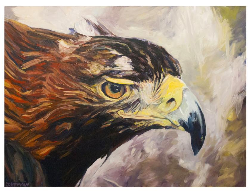 Tête d'Aigle .Huile sur toile.  Format : 130x 97 cm. L'image du tableau vient d'une capture d'écran télé.