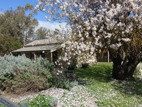 Almond Tree Cottage Joins Amy's House