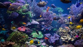 Ekosistemlerde Bağlılık