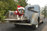 Denwerks - Santa's 47 Ford and Sled Dog Brings Christmas Cheers!