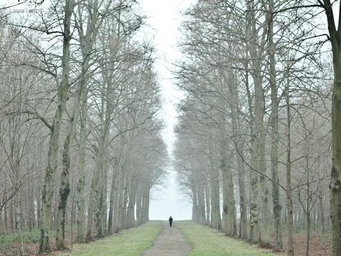 arbres-chemin-hiver--photographie-mural-decoration-laura-lago