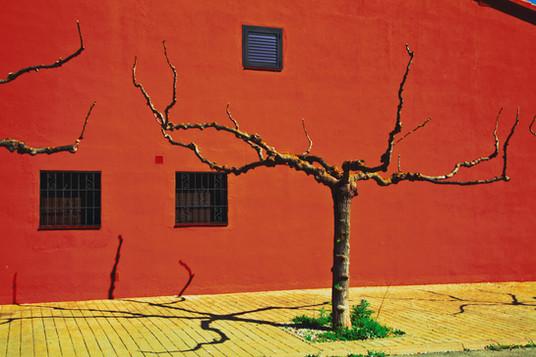 arbre-orange-jaune--photographie-mural-decoration-laura-lago