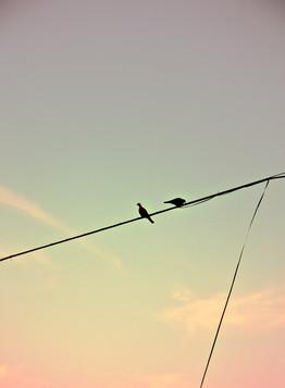 oiseaux-couple-nature--photographie-mural-decoration-laura-lago