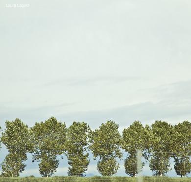 arbres-paysage-mouvement-vert-été--photographie-mural-decoration-laura-lago