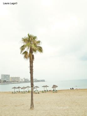 palmier-plage--photographie-mural-decoration-laura-lago