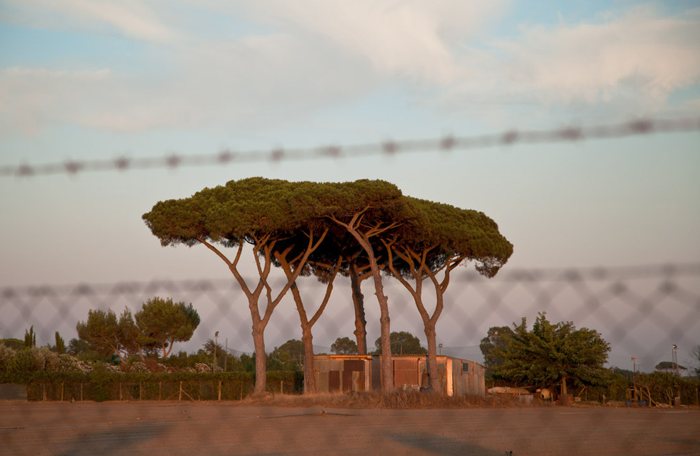 laura-lago-photographe-paris-arbres-rome