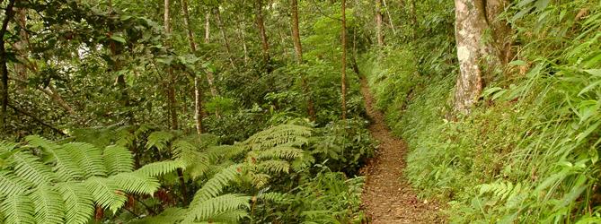 Village trail of Waerebo