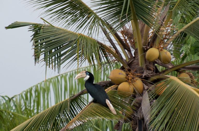 Birding Sawai