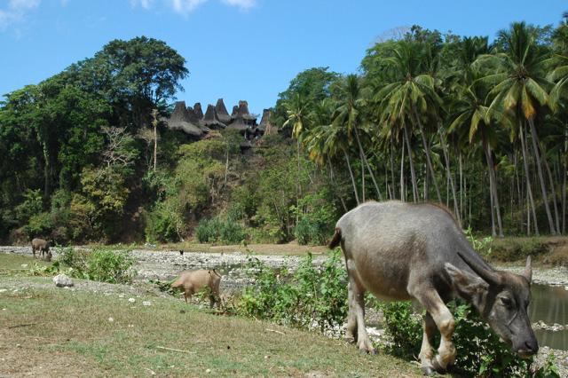 Sumba traditional houses