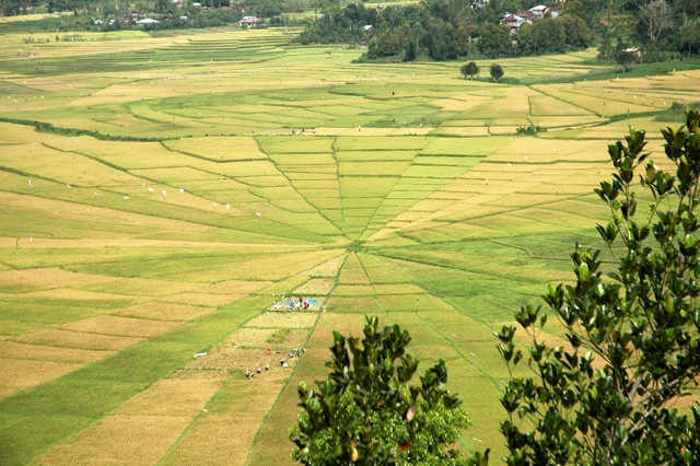 Lingko - typical rice fields on Flores Island