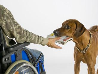 Обучени кучиња кои асистираат на лица со посебни потреби