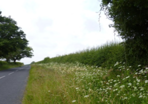 Green Infrastructure for a Greener Wales