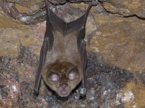 Where do bats go in the winter?