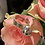Thumbnail: Silver Sphere Ring