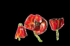 Amapolas - Maricela del Rio - Art Brusse