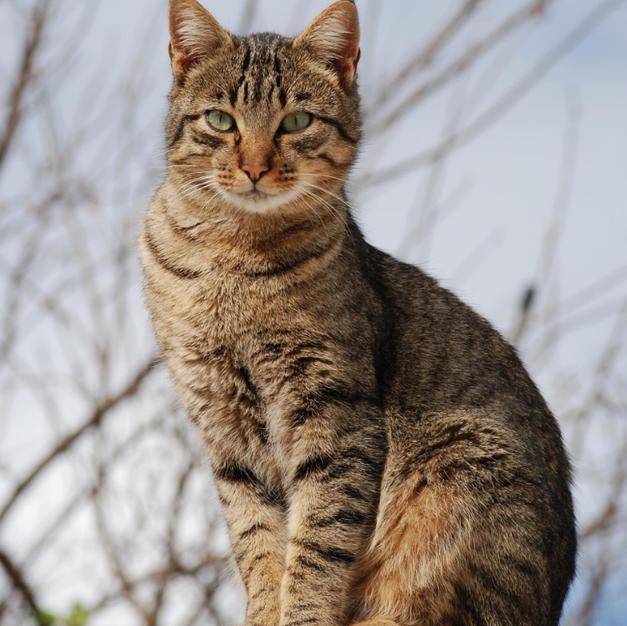 Cat no.16