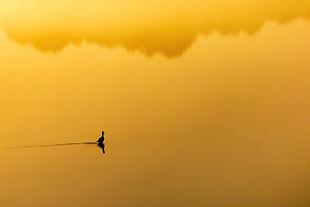Golden Hour-Joan Eckhardt.jpg