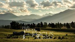 PROFOCUS-385.jpg