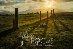 PROFOCUS-386.jpg