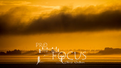 PROFOCUS-52.jpg