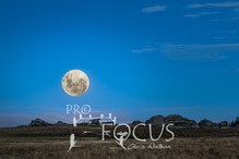 PROFOCUS-396.jpg