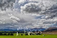 PROFOCUS-369.jpg