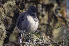 PROFOCUS-431.jpg