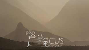 PROFOCUS-374.jpg