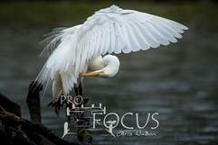 PROFOCUS-237.jpg