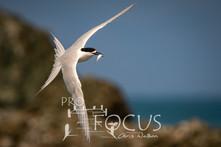 PROFOCUS-497.jpg