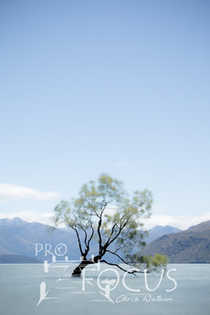 PROFOCUS-225.jpg