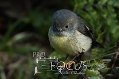 PROFOCUS-339.jpg