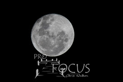PROFOCUS-355.jpg