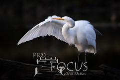 PROFOCUS-446.jpg
