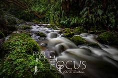 PROFOCUS-480.jpg
