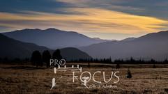 PROFOCUS-3.jpg